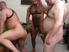 3-WAY: Bearded Hairy Bears' BJs-BB-ATM-BB -MULTIPLE BREEDING